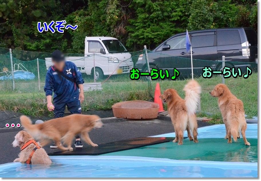 DSC_2443_20160830215550da9.jpg