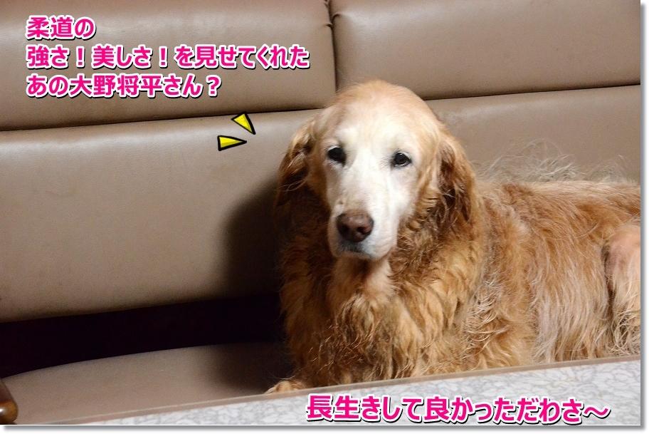 DSC_2581_20160823203555176.jpg