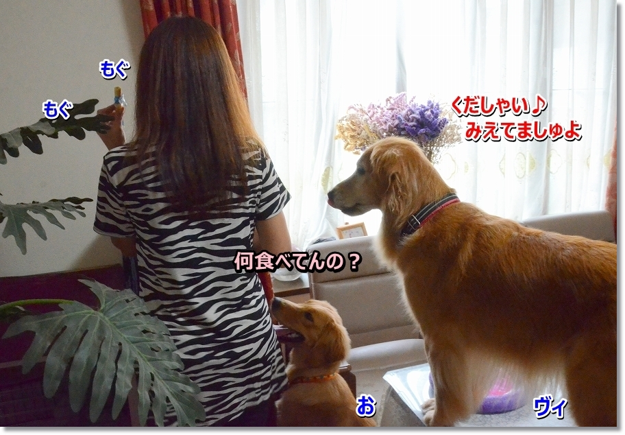 DSC_3090_201609202333349e9.jpg