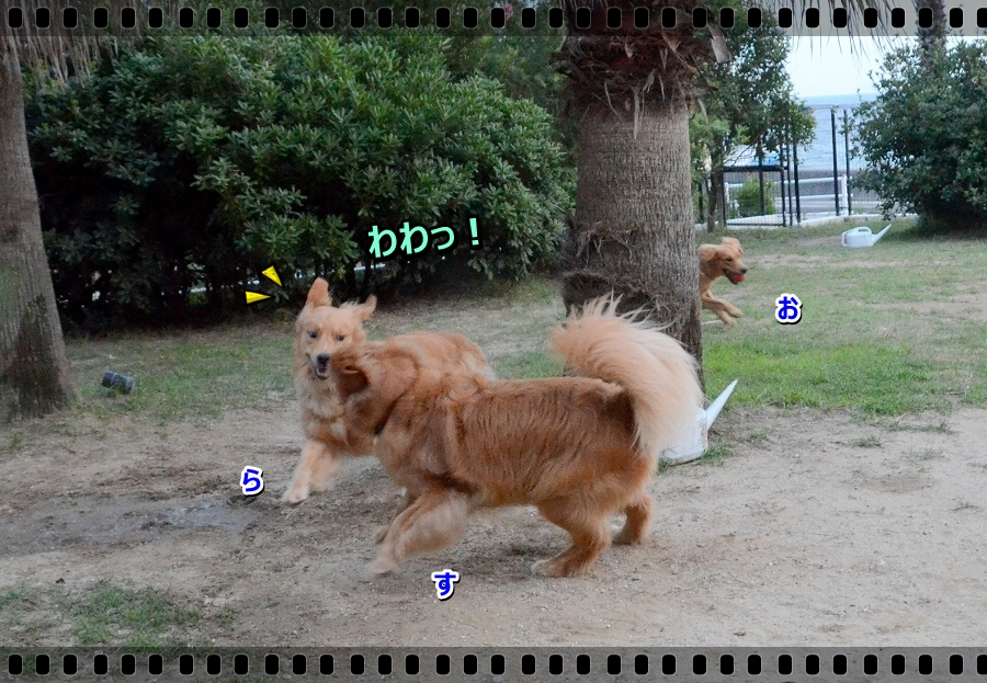 DSC_3221_20161005230756f2a.jpg