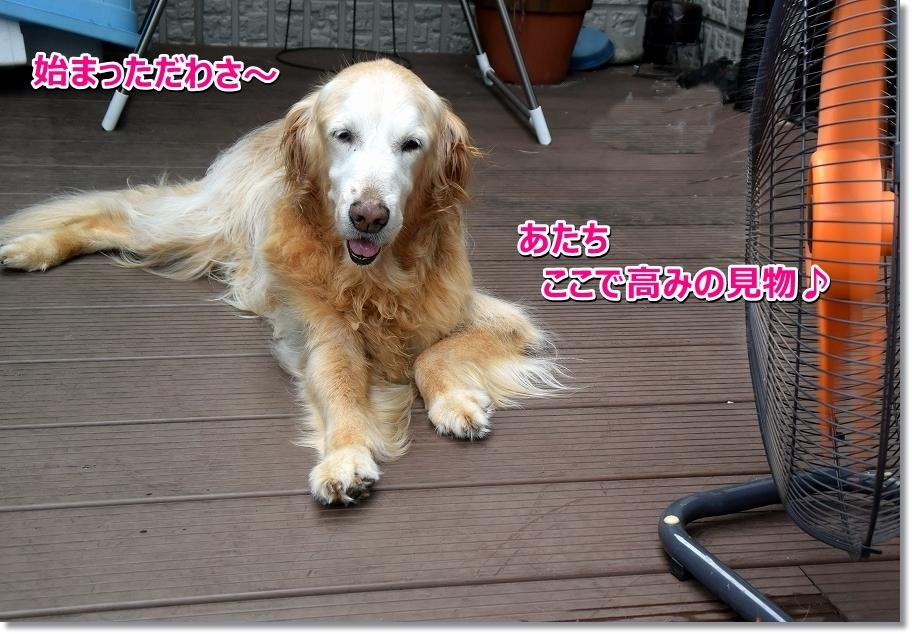 DSC_3260hajimattawa.jpg