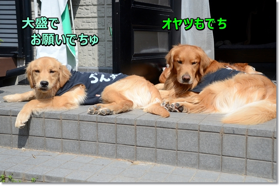 DSC_3347_20160502122126c38.jpg