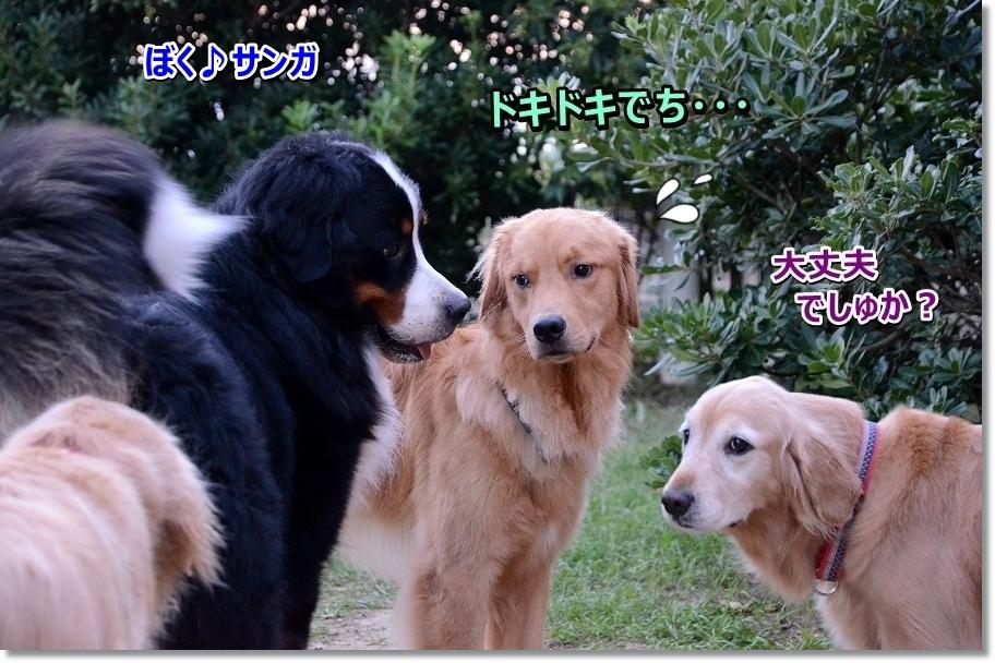 DSC_3381_201609272111005ac.jpg