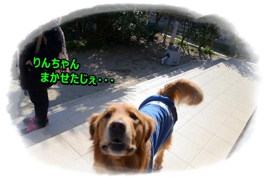 DSC_3453_2016042919593926e.jpg