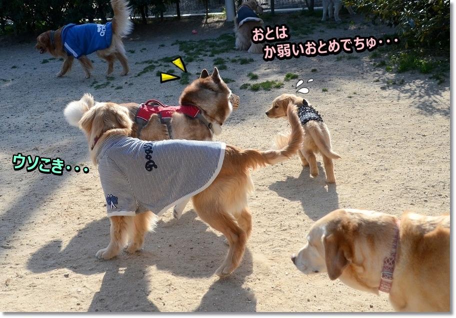 DSC_3474kayowaiotomedeti-1.jpg