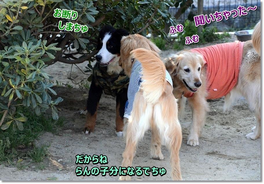 DSC_3796a-chansakaratehadame.jpg