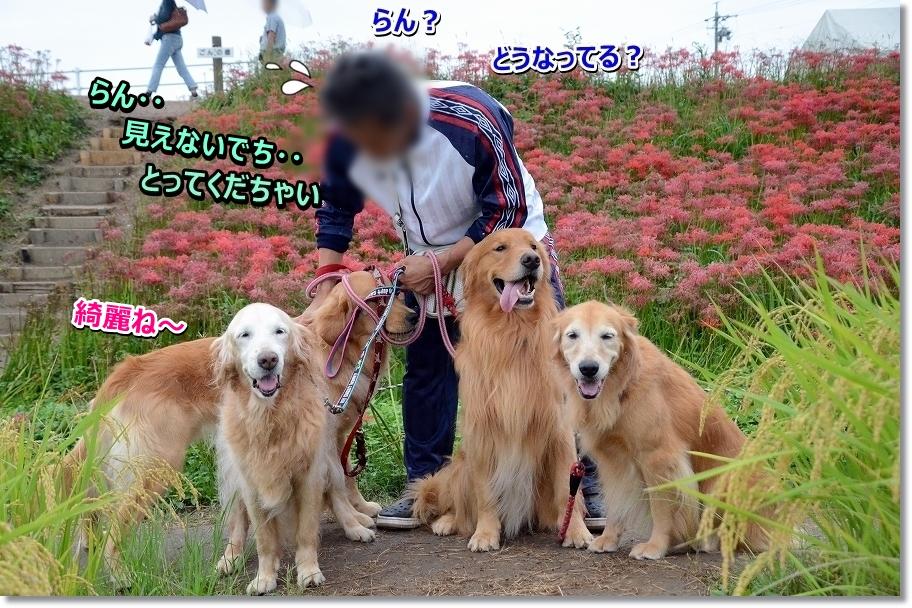 DSC_3952_2016100810261859f.jpg