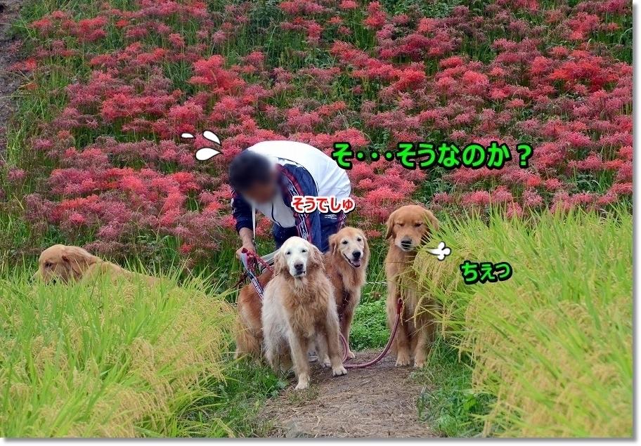 DSC_3961_201610081027207fa.jpg