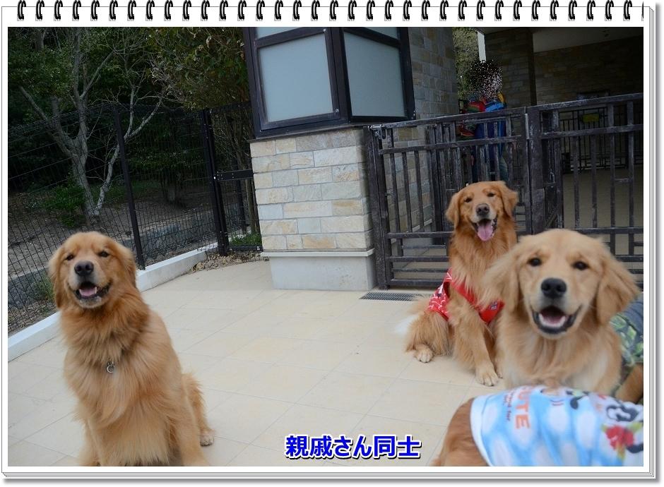 DSC_4024sinseki.jpg