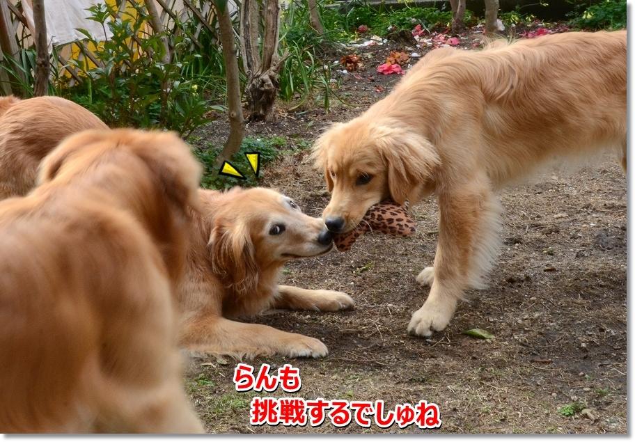 DSC_4301_2016041223482078a.jpg