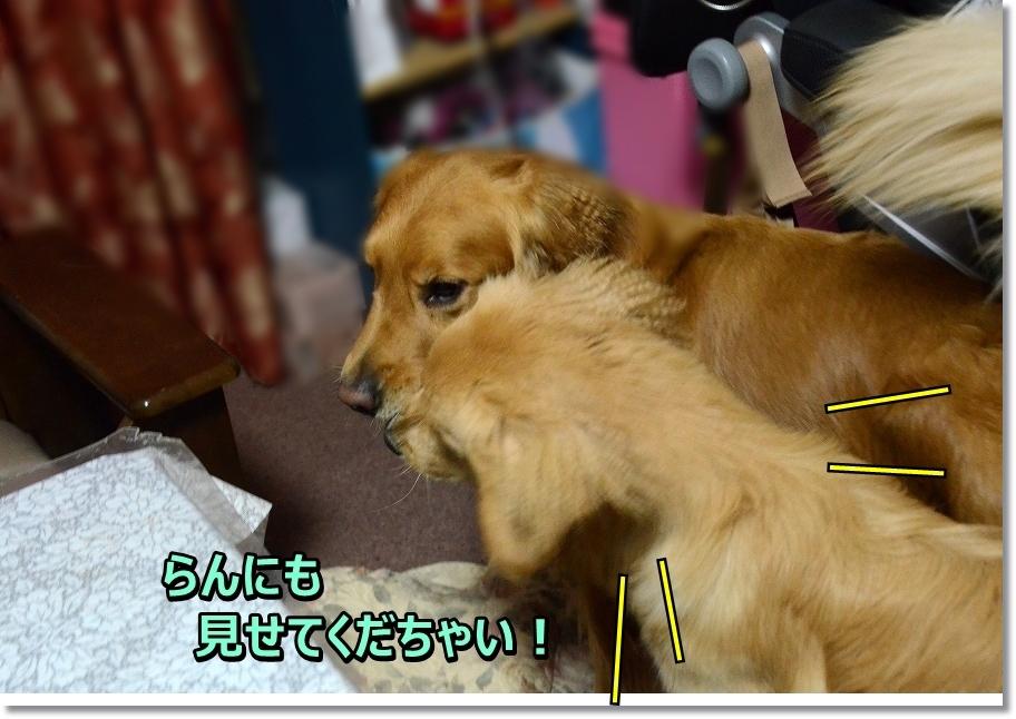DSC_4340_201605271645504a4.jpg