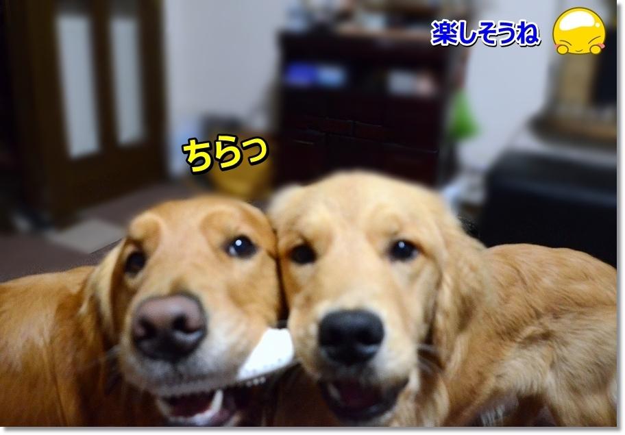 DSC_4369hanache.jpg