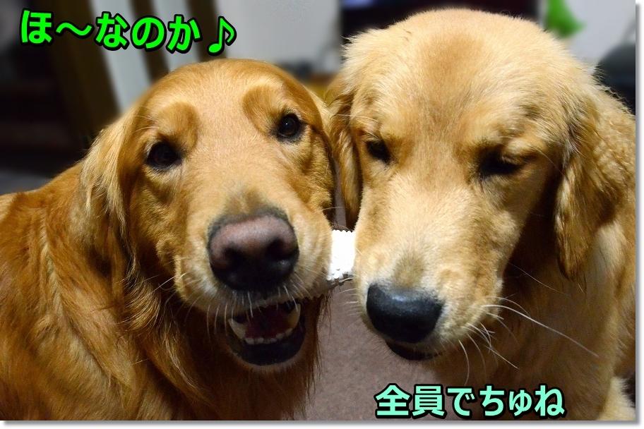 DSC_4372_201605271647225db.jpg