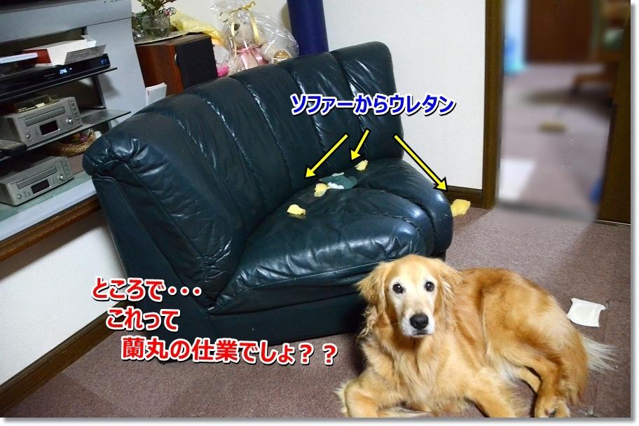 DSC_4383_20160527164646cf5.jpg