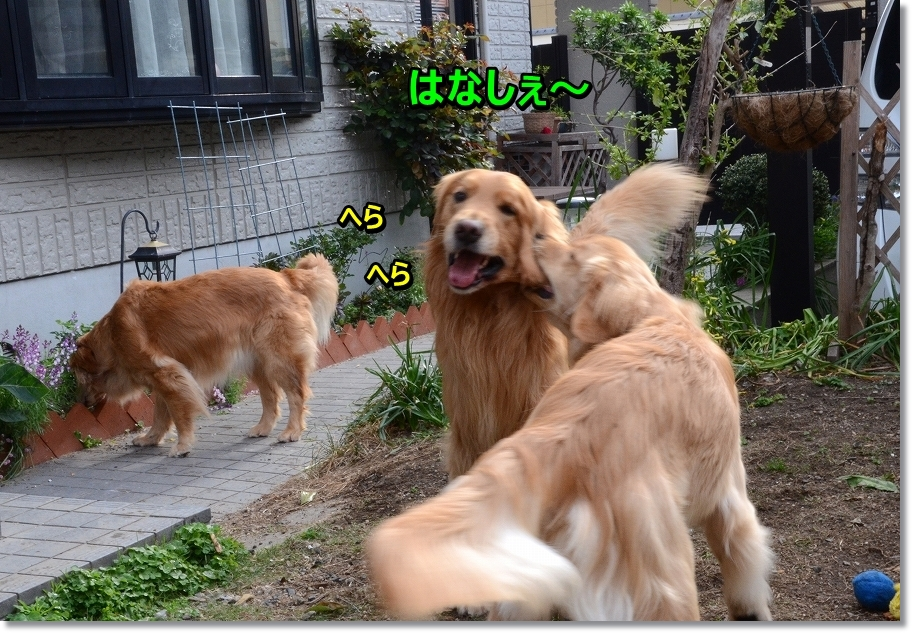 DSC_4442herahera.jpg