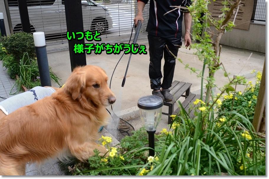 DSC_4700nai.jpg