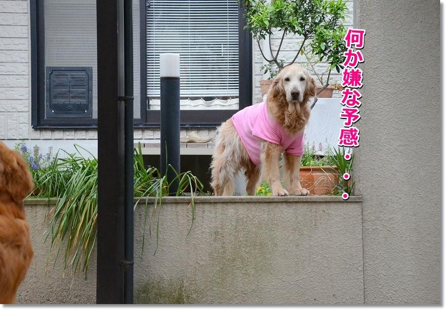 DSC_4705iyanayokan.jpg