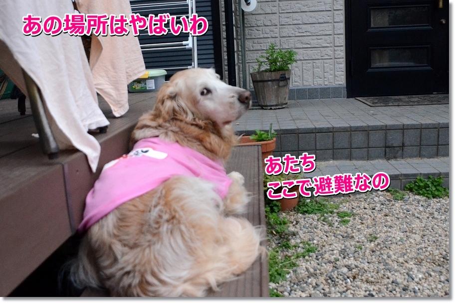 DSC_4830hinan.jpg