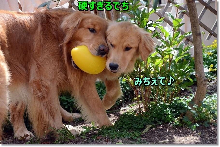 DSC_4944_20160602174222b09.jpg