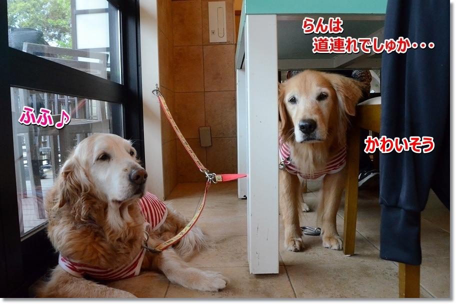 DSC_5031ochasitemasu.jpg