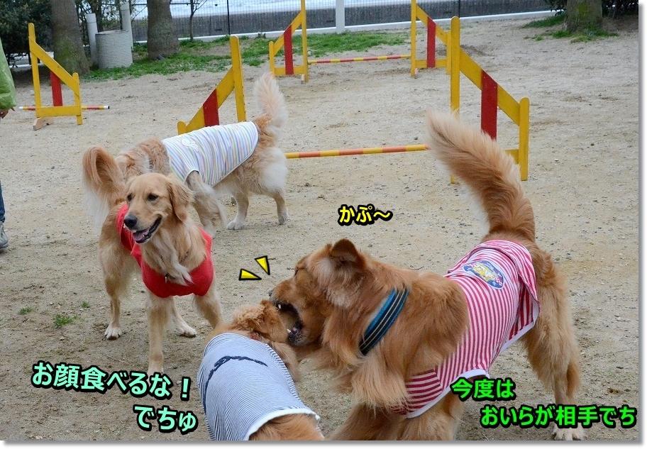 DSC_5099tabechau.jpg