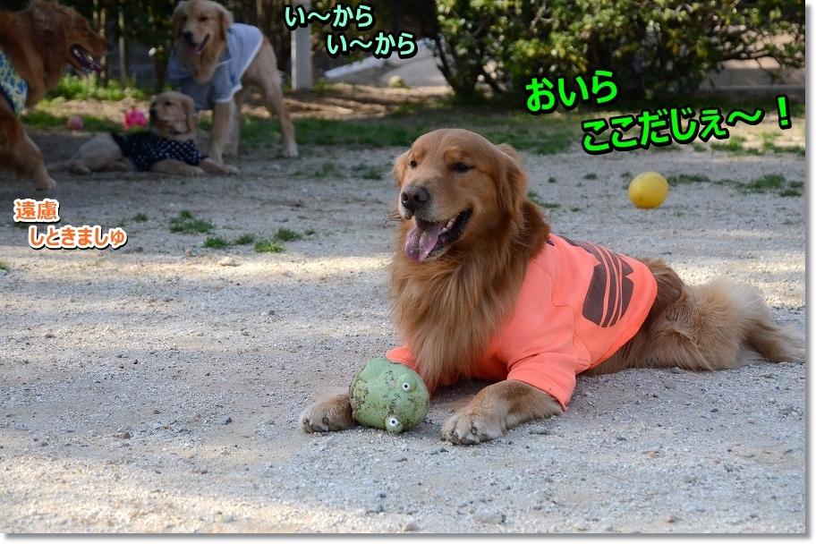 DSC_5346oirakoko.jpg