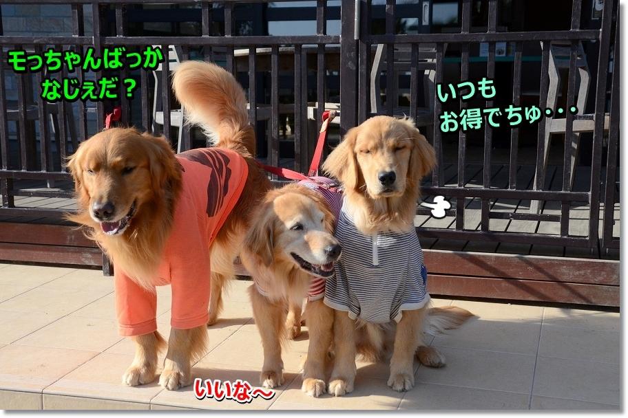 DSC_5386otokunamocchan.jpg