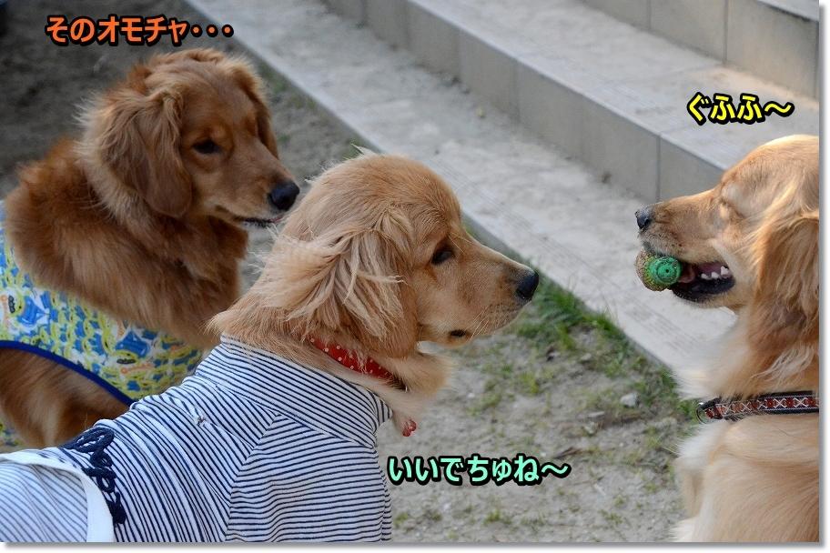 DSC_5405gururu.jpg