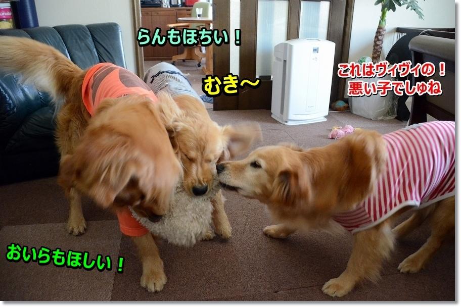 DSC_5439aretokoreha.jpg