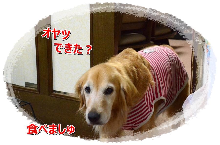 DSC_5879oyatu.jpg