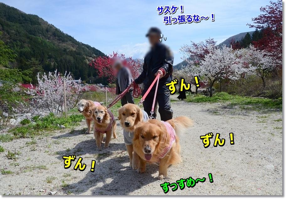 DSC_6071sakiha.jpg