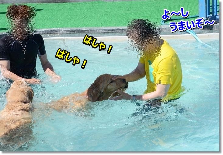 DSC_6891oyogeta.jpg