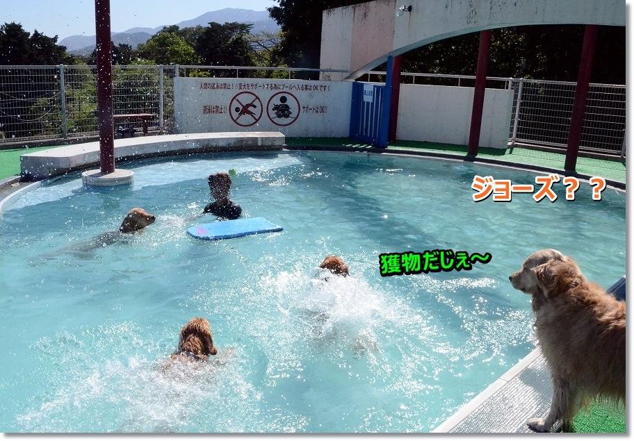 DSC_7016jo-zu.jpg
