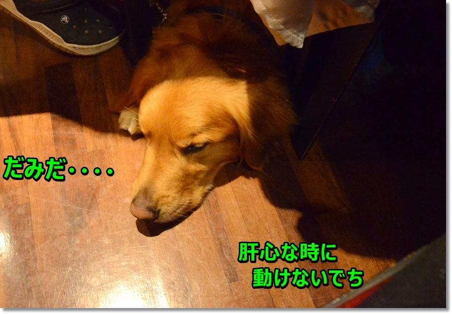 DSC_7117_20160522225132146.jpg