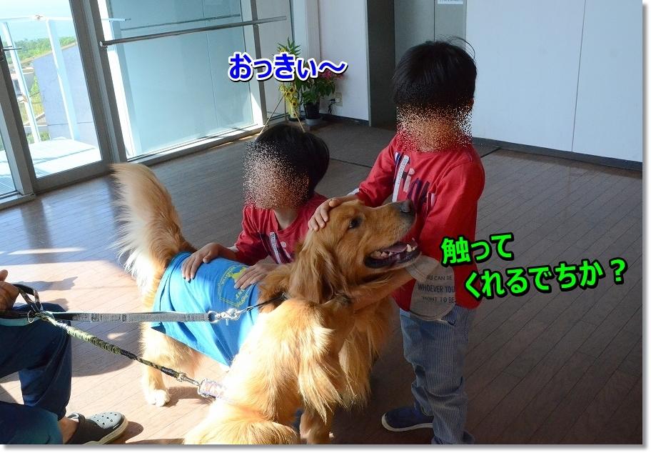 DSC_7351_20160524201305db5.jpg