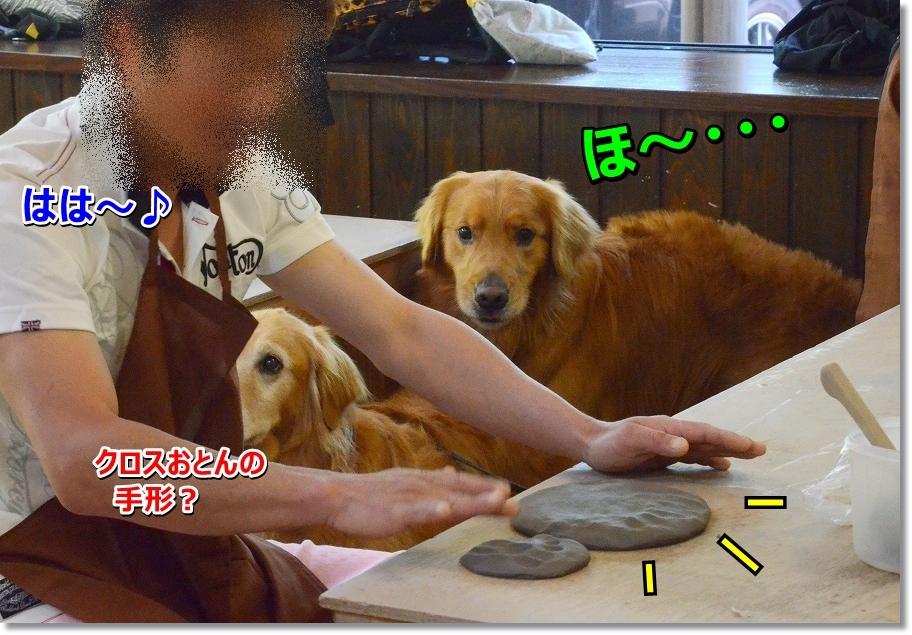 DSC_7637_20160525235459ab1.jpg