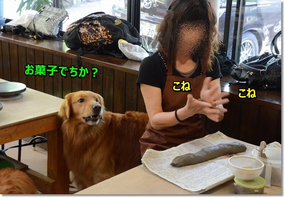 DSC_7647_20160526001430111.jpg