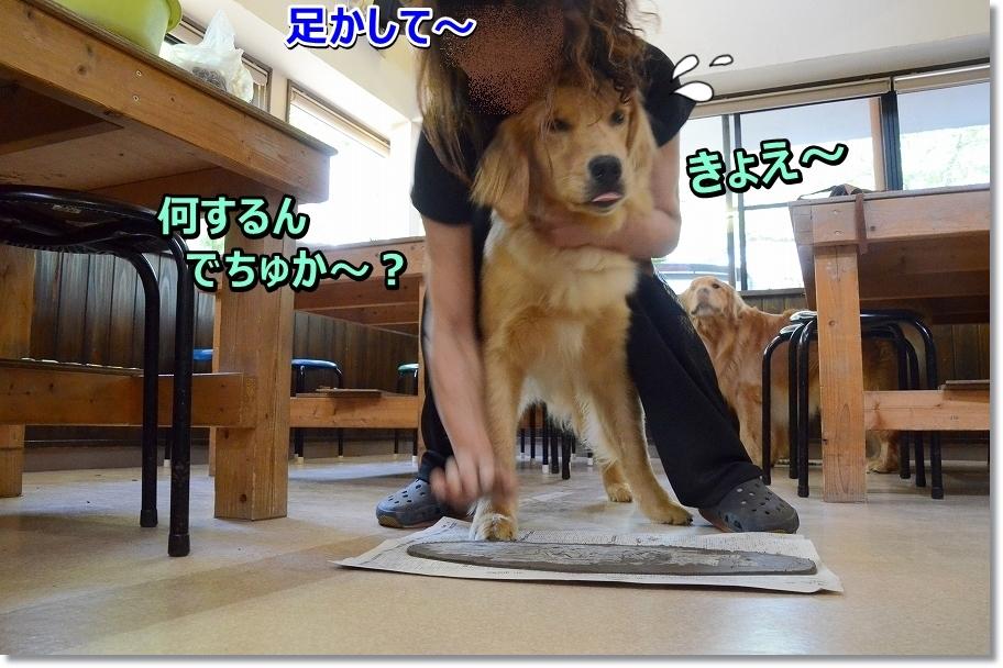 DSC_7723_20160526001531525.jpg
