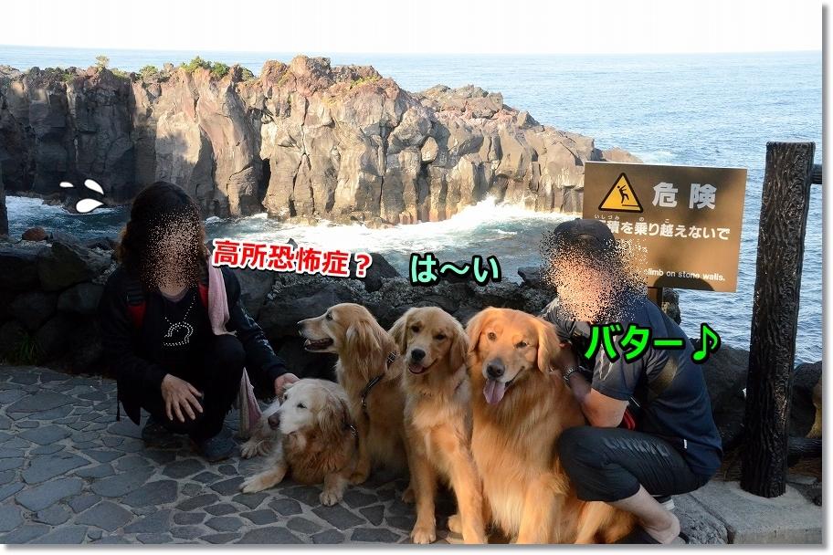 DSC_7807_20160526200936f42.jpg