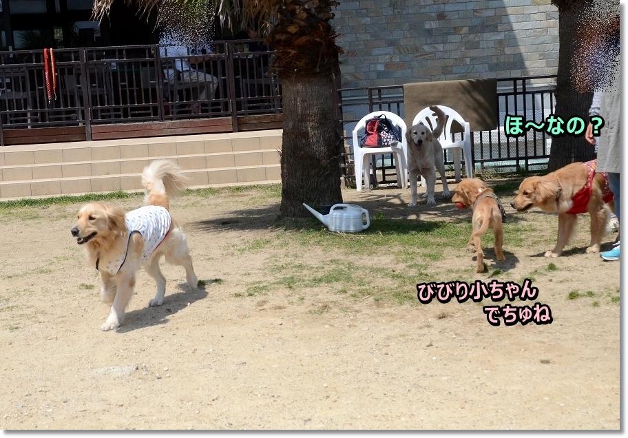 DSC_8141bibirisyouchan.jpg
