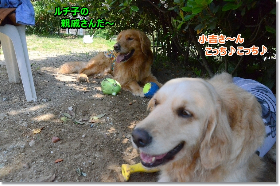DSC_8143hitoyasumi.jpg