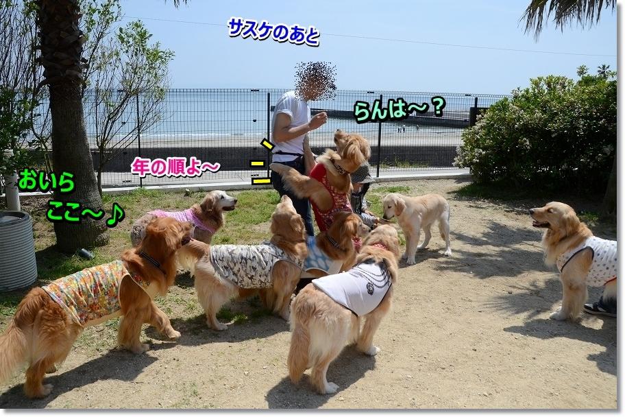 DSC_8159otugihasasuke.jpg