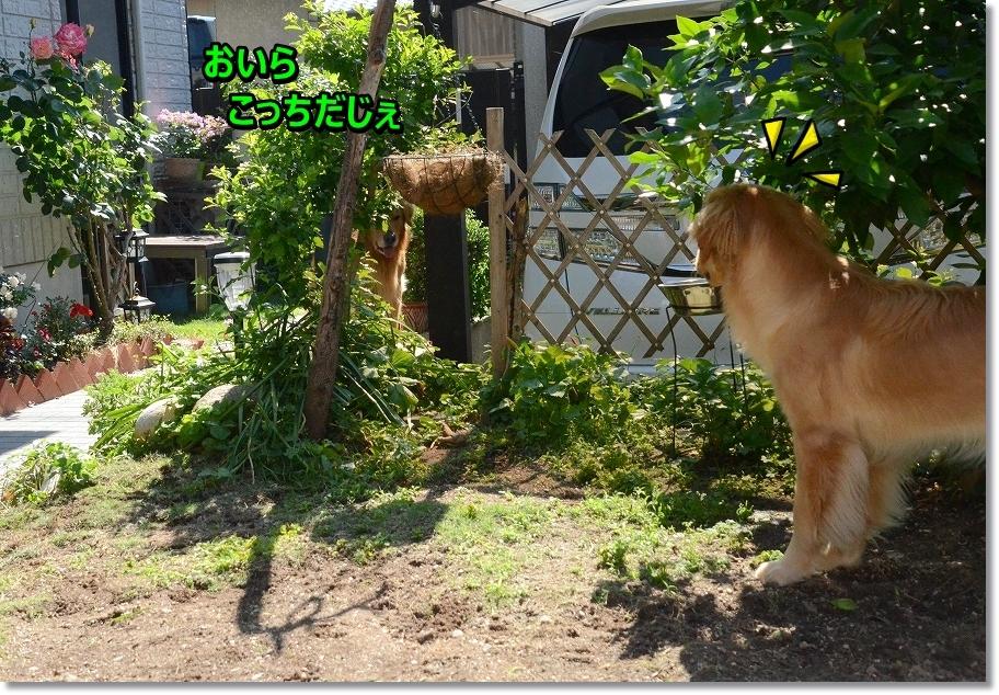 DSC_8331_20160626124147cb7.jpg