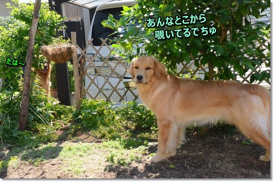 DSC_8333_2016062612420384c.jpg