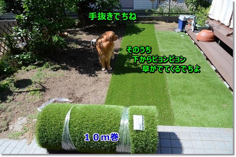DSC_8353-1.jpg