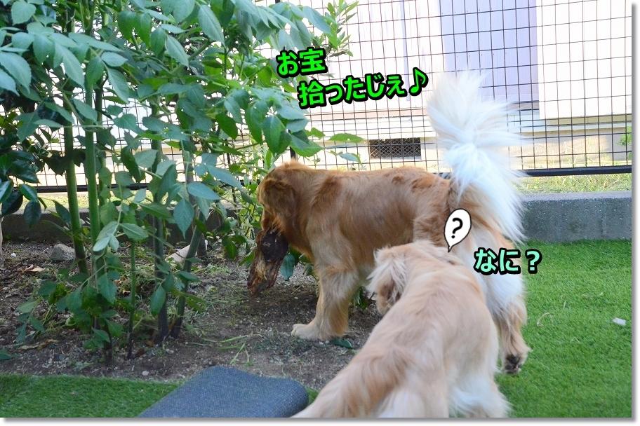 DSC_8405_20160626130409569.jpg