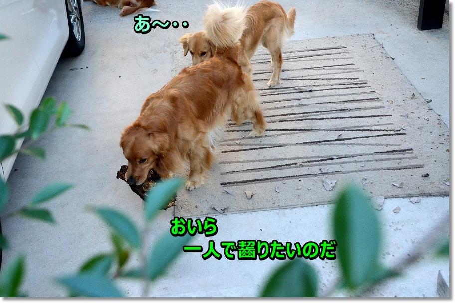 DSC_8417_20160626130426afa.jpg