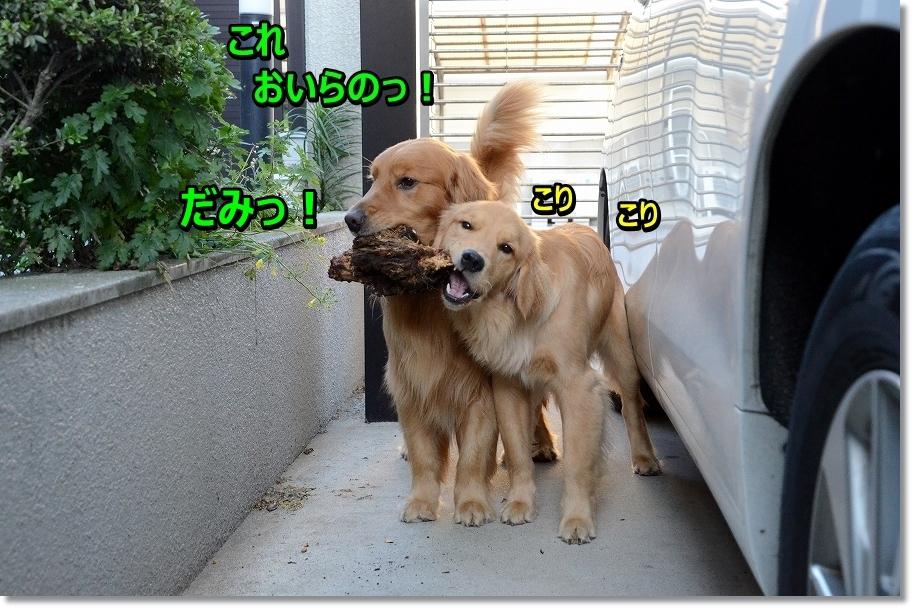 DSC_8425.jpg