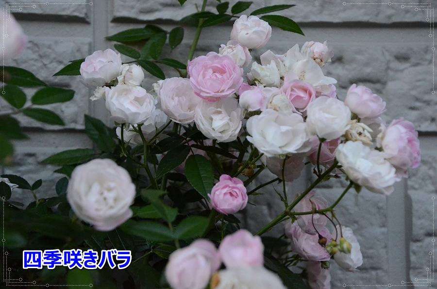 DSC_8429_201607052159281bb.jpg