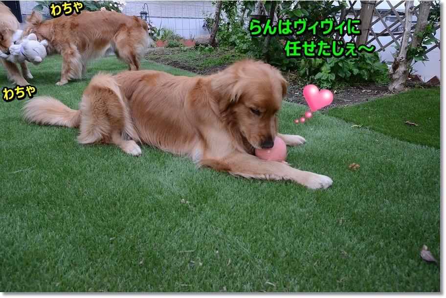 DSC_8445_201607052159596cd.jpg